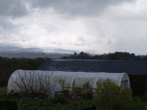 Polytunnel in the snow