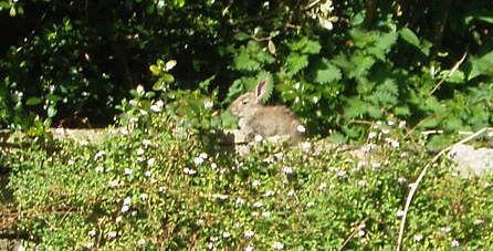 Spot the rogue rabbit!